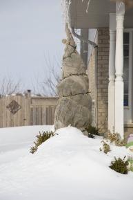 Winterized Tree Wrapped In Burlap