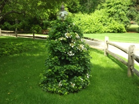 climbing-hydrandra-creative-solution-to-hide-old-lamp-post-urell-1