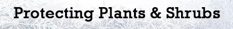protecting-plants-shrubs