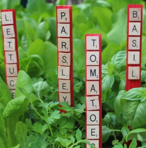 Scrabble Leter